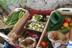 Légumes bio et locaux